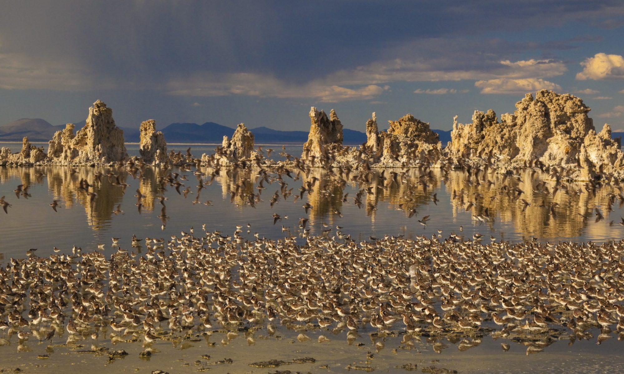 Mono Lake Foundation